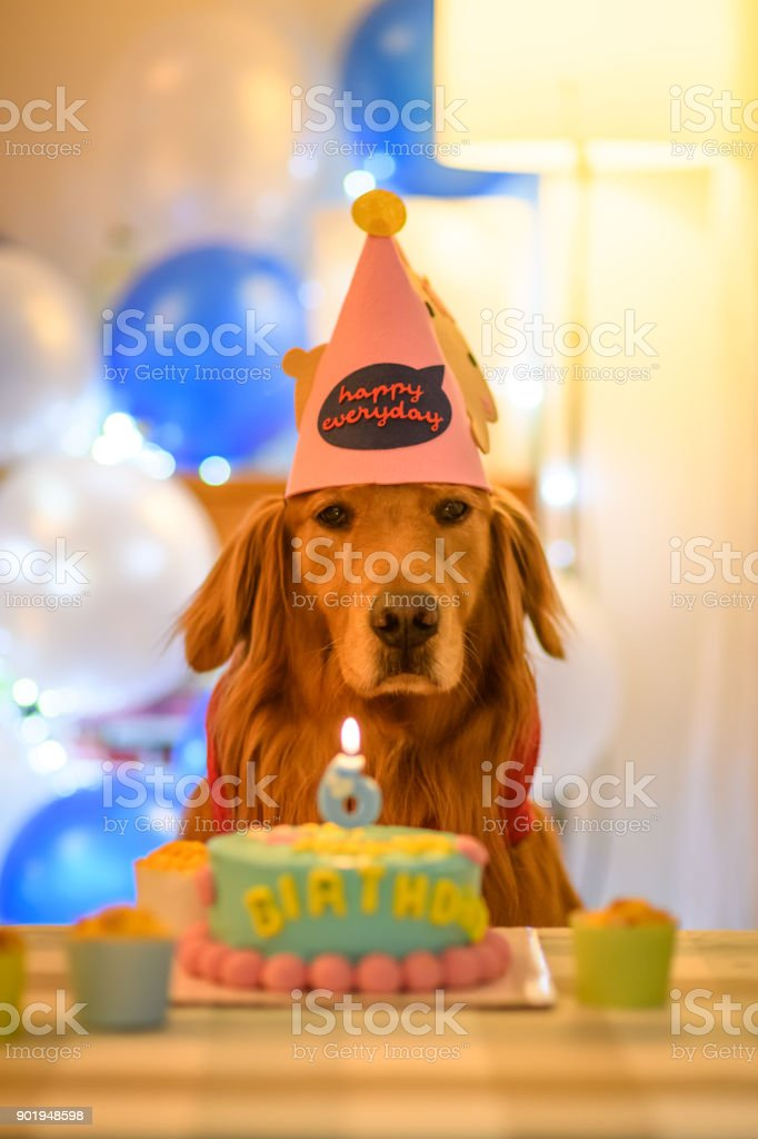 Outstanding Golden Retriever And Birthday Cake Stock Photo Download Image Funny Birthday Cards Online Alyptdamsfinfo