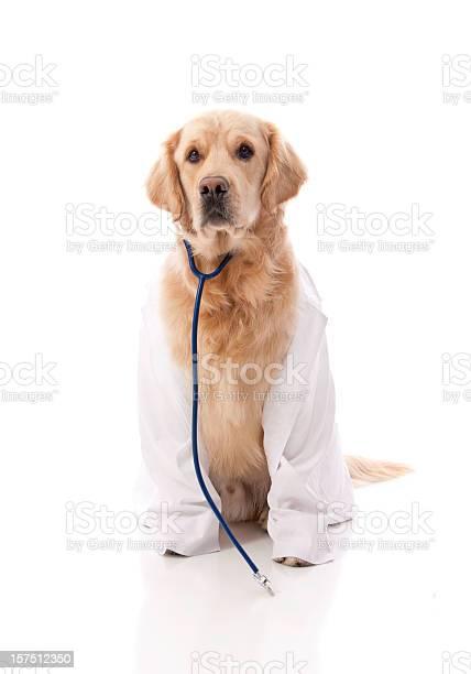 Golden retriever doctor picture id157512350?b=1&k=6&m=157512350&s=612x612&h= voj2gvnhhwfcezcowq elhoobhpyoyfsspowgf8h7q=