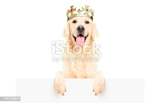 istock Golden retriever dog wearing crown on a panel 179132625