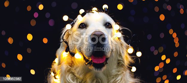 istock Golden retriever dog with red hat 1058952382