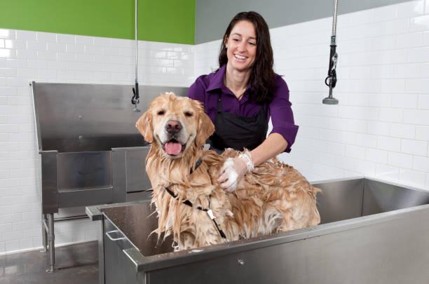 golden retriever ottenere un bagno di cane auto servizio lavaggio. - bacinella metallica foto e immagini stock