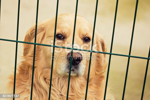 Photography of golden retriever in cage.