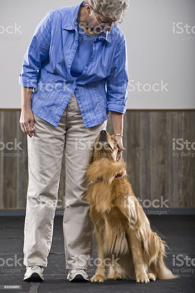 Golden Retriever leaning against owner royalty free stockfoto