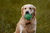 In his mouth, it holds a green ball that looks like a coronavirus.