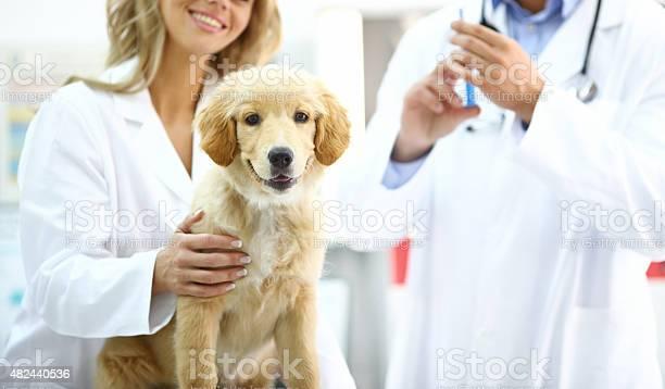 Golden retriever puppy at vets office picture id482440536?b=1&k=6&m=482440536&s=612x612&h=i2lokrsnqpqdfkyl9xnfaadtdqpkxte5vzma95cqr3w=