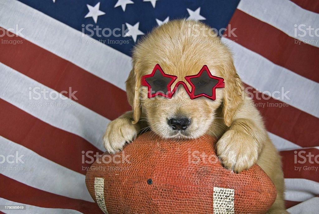 golden retriever puppy on football royalty-free stock photo