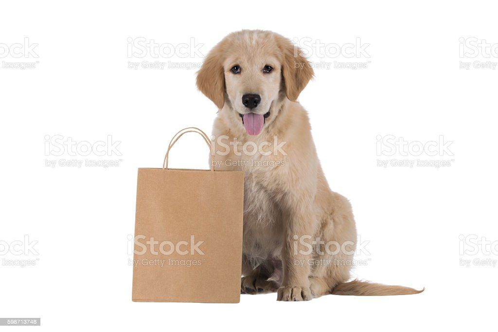 Golden Retriever puppy stitting with bag isolated on white – Foto