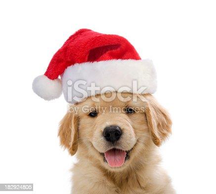 Golden Retriever Santa Puppy smiling