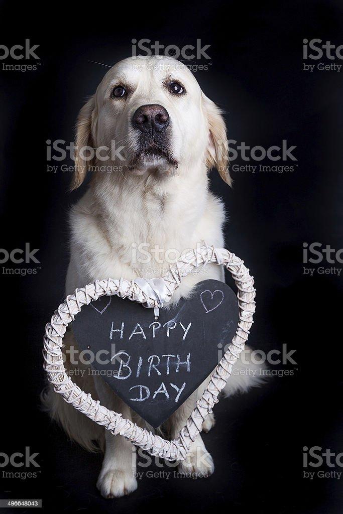 Golden Retriever Auguri Di Buon Compleanno Fotografie Stock E