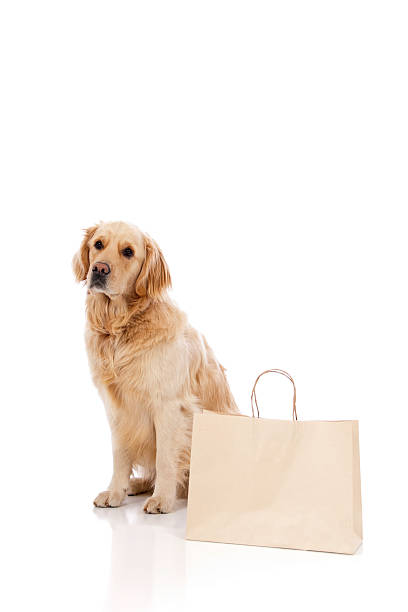 Golden retriever with blank shopping bags picture id186864115?b=1&k=6&m=186864115&s=612x612&w=0&h=5nism3epkfjpzafkekgznl3e9ovnvox4assr1wn ufw=