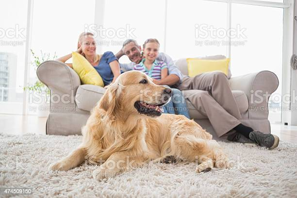 Golden retriever with family at home picture id474509150?b=1&k=6&m=474509150&s=612x612&h=vvak nc5c9w64spysdeyhf7bgqlw9heumqb0wvcedmi=