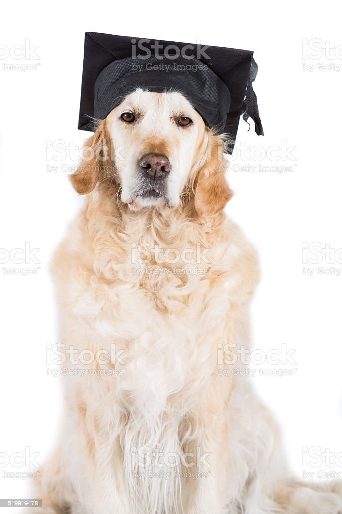 Simple Graduation Cap Black Adorable Dog - golden-retriever-with-graduation-cap-picture-id519919478?k\u003d6\u0026m\u003d519919478\u0026s\u003d612x612\u0026w\u003d0\u0026h\u003dqaByAZMbWgYC5326w8-81oMU4t0FVBiGi0LjkOBeJAE\u003d  2018_496426  .com/photos/golden-retriever-with-graduation-cap-picture-id519919478?k\u003d6\u0026m\u003d519919478\u0026s\u003d612x612\u0026w\u003d0\u0026h\u003dqaByAZMbWgYC5326w8-81oMU4t0FVBiGi0LjkOBeJAE\u003d