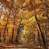 Driving to the macbride raptor center in Iowa near Iowa city in autumn