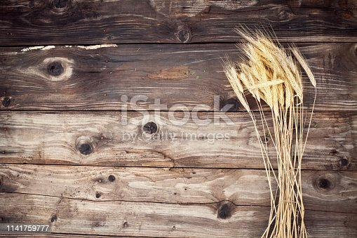 Golden Rye Spikelets Over dark Wooden Background