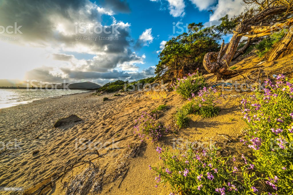 Golden sand dune in Alghero coast at sunset - Royalty-free Atmosphere Stock Photo