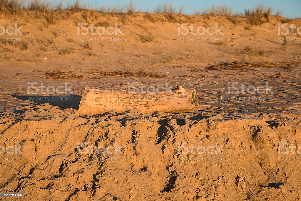 Golden sand dune with tree trunck brought by the sea stock photo