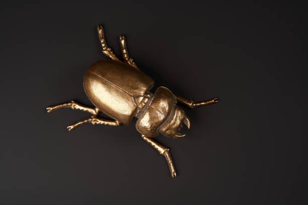 黑色背景的金色甲蟲,帶複製空間圖像檔