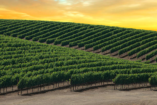 Golden Skies Over Napa Valley stock photo
