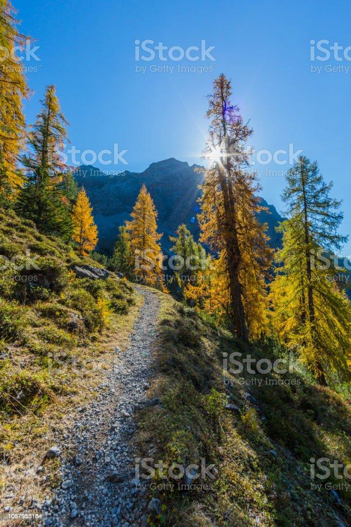 Goldene Fichtenwald im Herbst in den Schweizer Bergen, Sonnenstrahlen, blauer Himmel – Foto