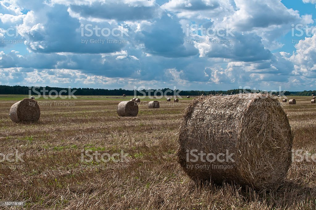 Golden stacks of hay in the harvested field stock photo
