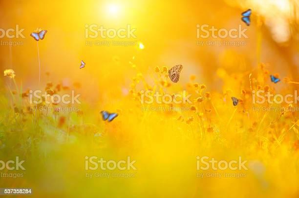 Golden summer meadow picture id537358284?b=1&k=6&m=537358284&s=612x612&h=hdm1t4weuopy8fuxko4s yxnj9mznnreuxs ig3rdya=