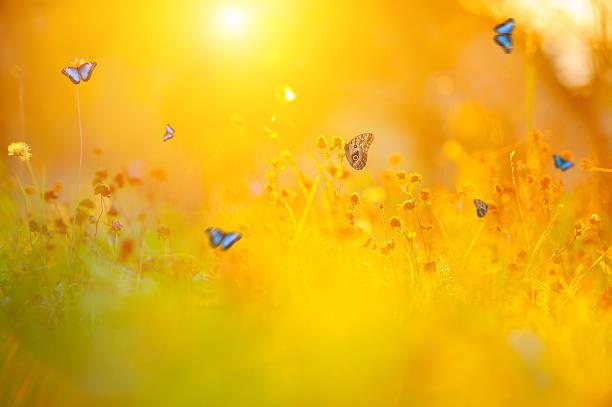 Golden summer meadow picture id537358284?b=1&k=6&m=537358284&s=612x612&w=0&h=vsto6accpidyynt0cbo8k gtdpkkul5sx3o 3kl3uio=