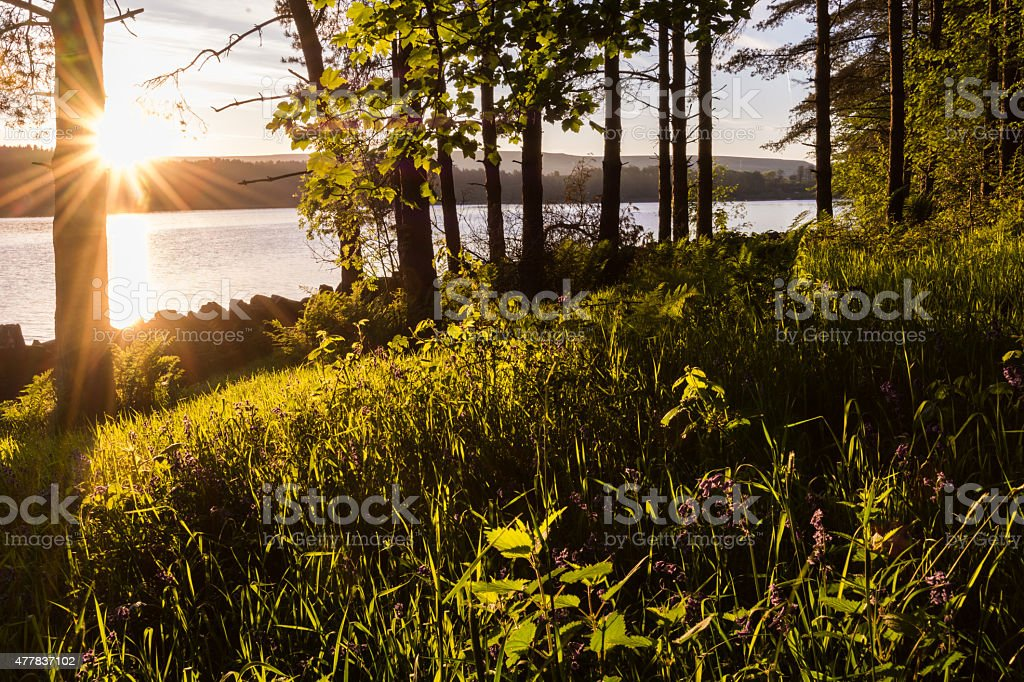 Golden Sun Rays Entering A Forest Early Morning. stock photo