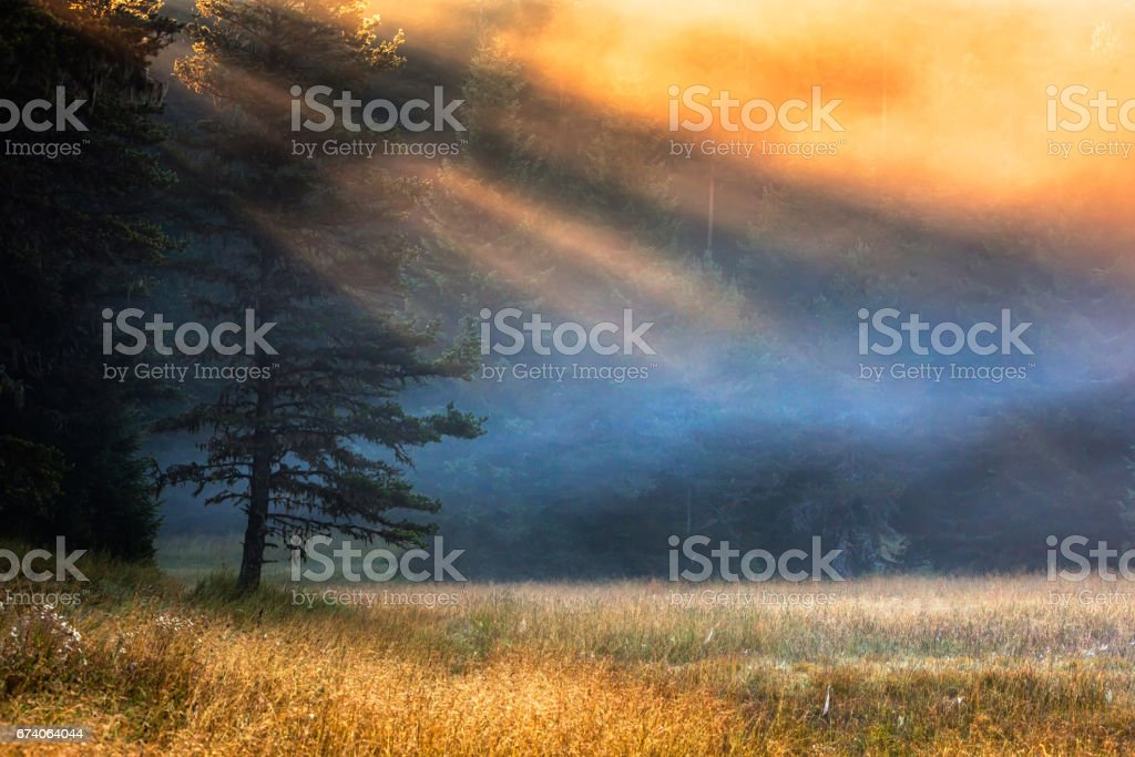 Golden Sunbeams on a Mountain Meadow royalty-free stock photo