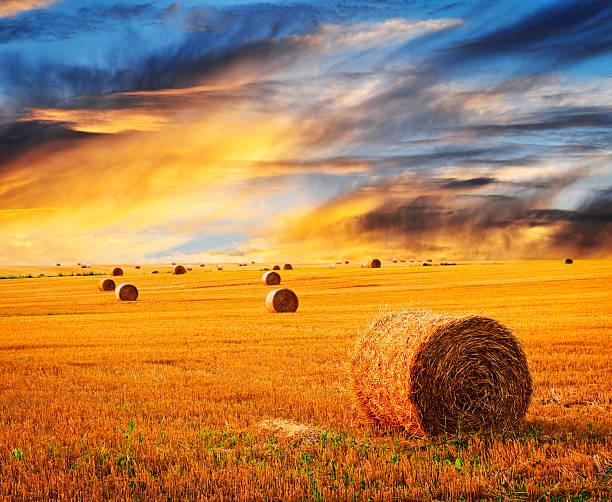 Goldener Sonnenuntergang über Feld-Hof – Foto