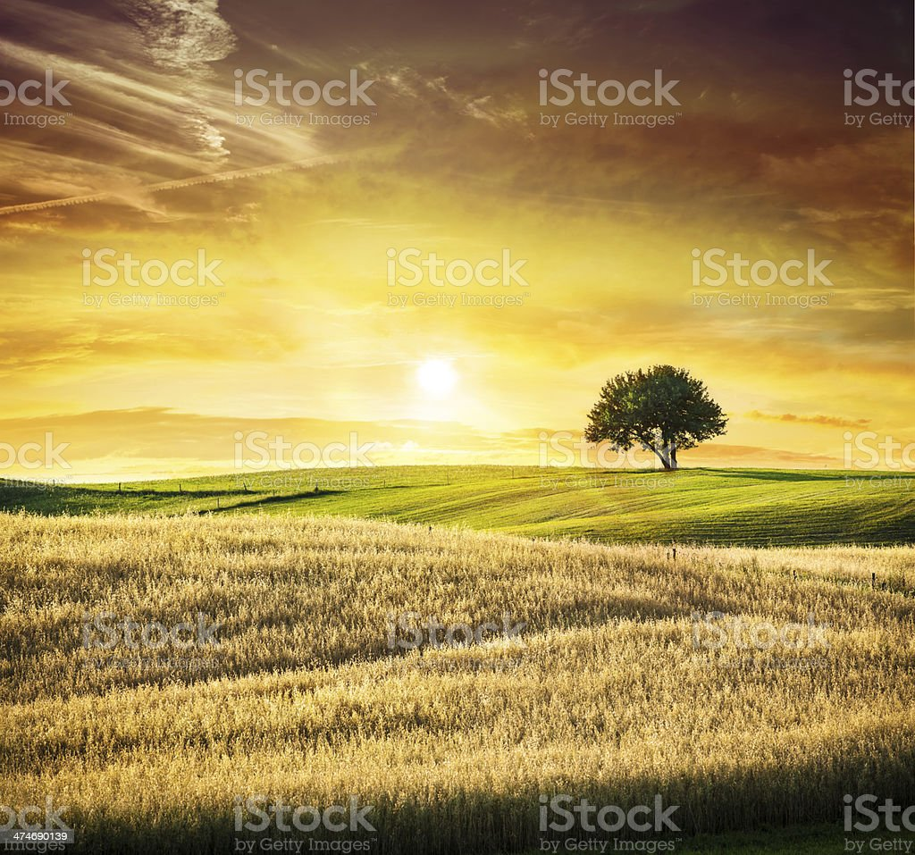 Golden Sunset over Idyllic Farmland Landscape - Lonely Tree stock photo