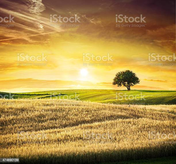 Golden Sunset Over Idyllic Farmland Landscape Lonely Tree Stock Photo - Download Image Now