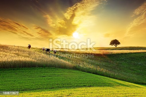 Golden Sunset over Idyllic Farmland Landscape - Sun, Field, Meadow, Tree and Cows