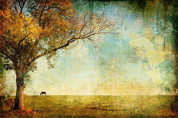 goldener sonnenuntergang. - bilder landschaften stock-fotos und bilder