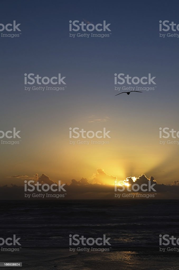 Golden sunset seagull royalty-free stock photo