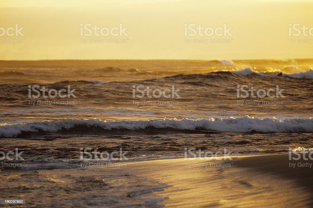 Golden Surf royalty-free stock photo