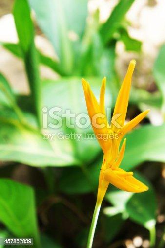 Golden Torch in the garden of thailand