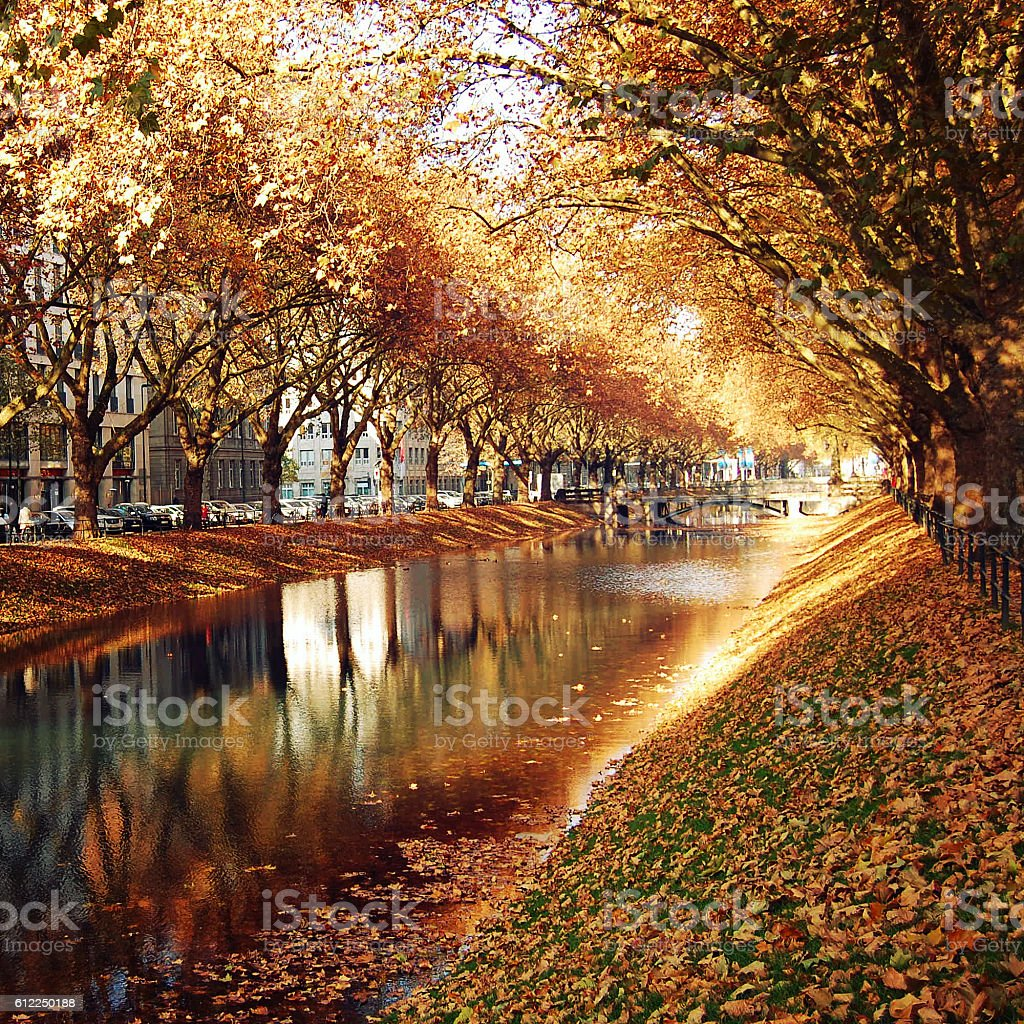 Golden Trees Reflecting in the canal. Autumn photo stock photo