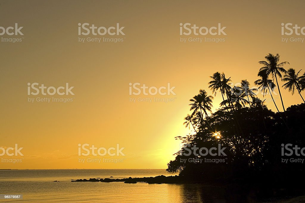 Golden Tropics royalty-free stock photo