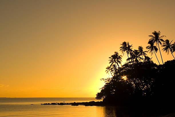 Golden Tropics stock photo