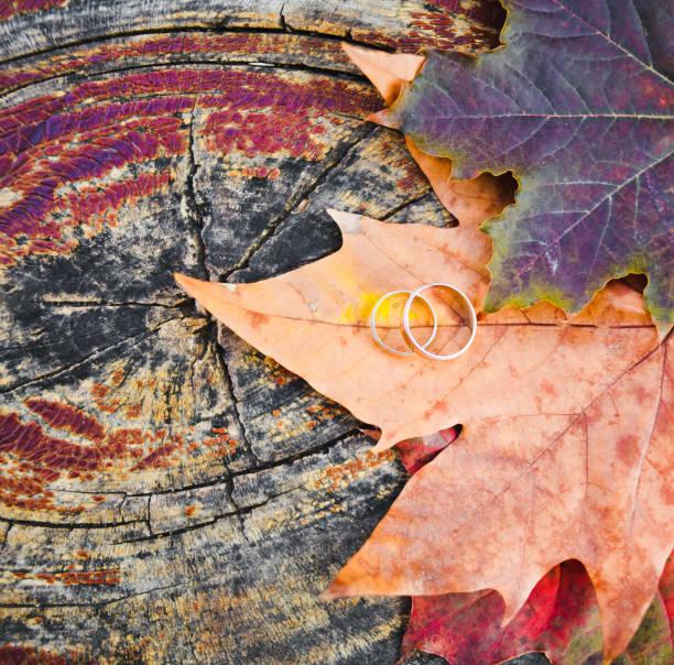 goldene hochzeitsringe auf herbstlichen ahornblättern - herbst hochzeitseinladungen stock-fotos und bilder
