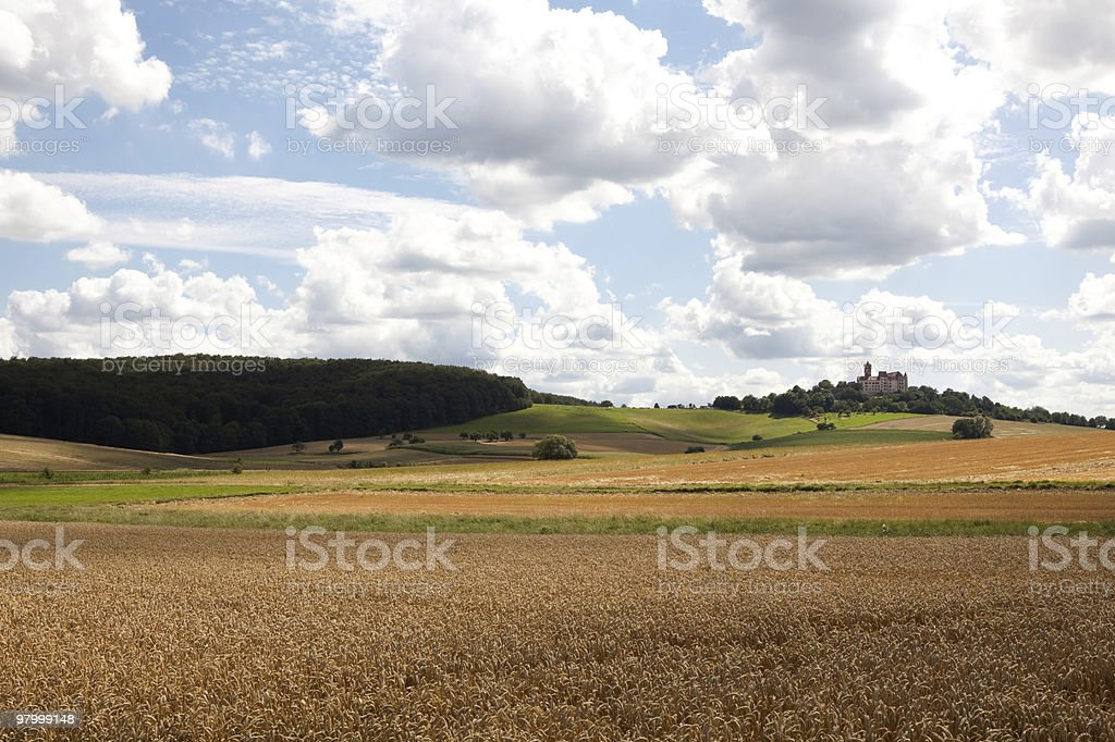 Golden wheat field clouds blue sky sunny green grass trees royalty-free stock photo