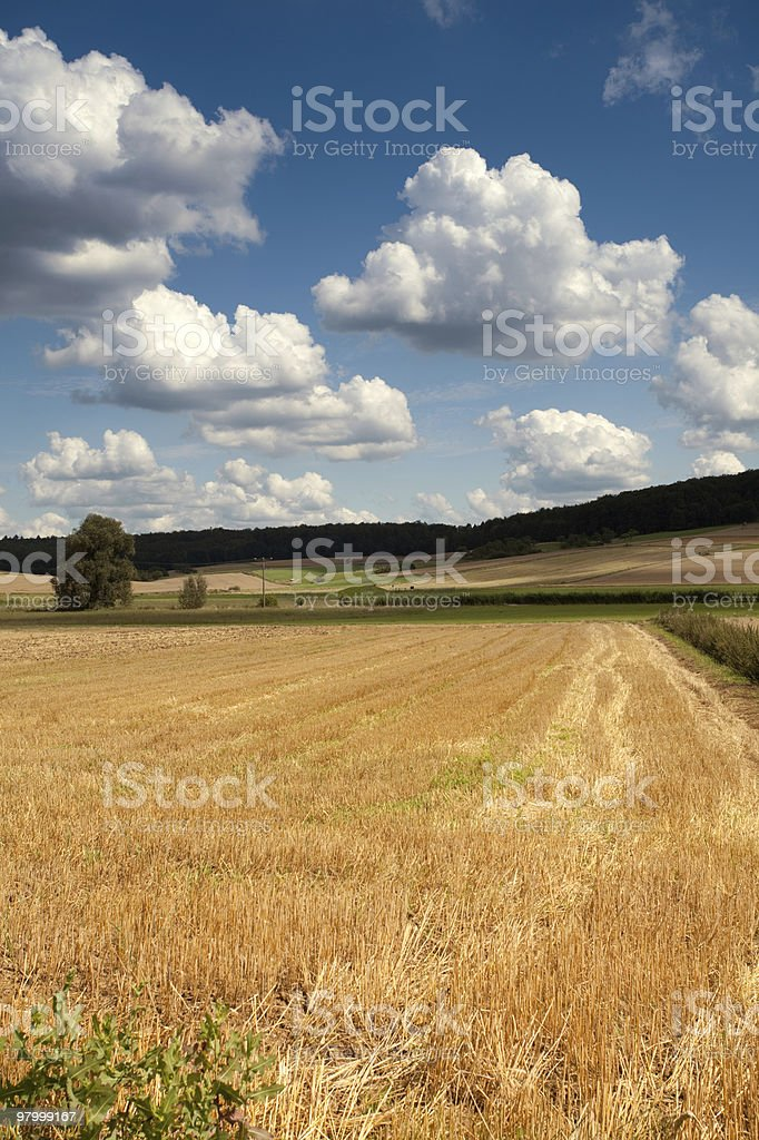 golden wheat field clouds blue sky sunny green tree royalty-free stock photo
