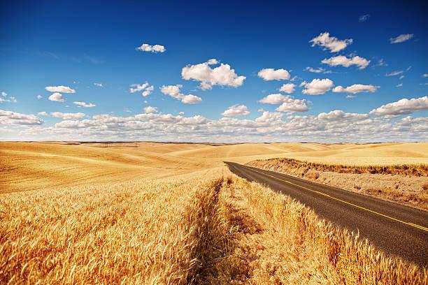 Campo de trigo dorado, road a, cielo azul - foto de stock