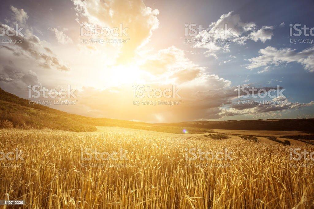 Goldene Weizenfeld unter schönen Sonnenuntergang Himmel Lizenzfreies stock-foto