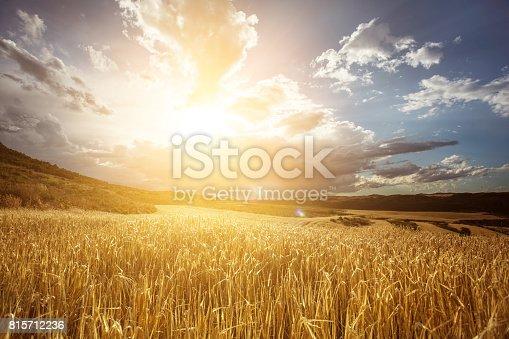 istock Golden wheat field under beautiful sunset sky 815712236