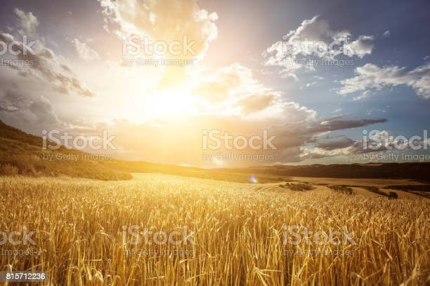 Photo of Golden wheat field under beautiful sunset sky