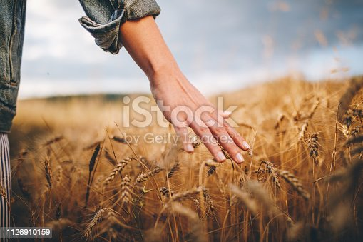 Beautiful young girl with a basket full of flowers walking through wheat and lavander field