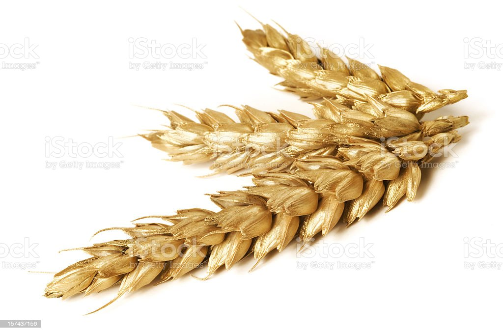 Golden wheat on white background - close-up royalty-free stock photo