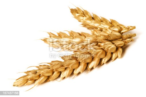 Detail of gold wheat stems isolated on white background with dropped shadow. Nikon D300.