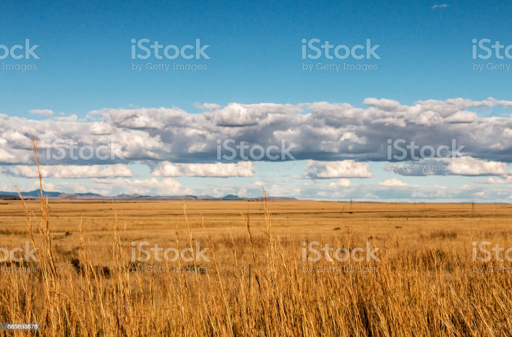 Golden Winter Grassland Landscape Against Blue Sky and Clouds ロイヤリティフリーストックフォト